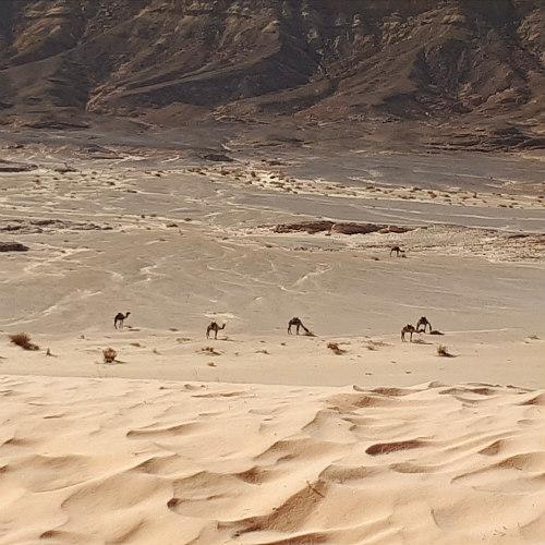 impressie lunchstop DesertJoy