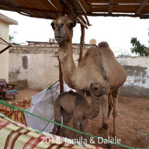 Jamila en Dalele 2018