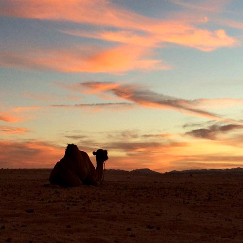 desertjoy nomadisch reizen