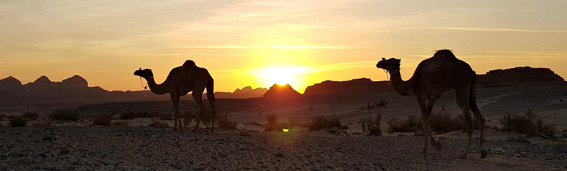 stichtingdalel voor kamelenwelzijn in zuid sinai