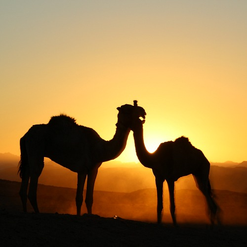 desertjoy woestijnreizen