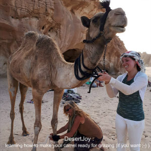 learning how to make your camel ready for grazing desertjoy